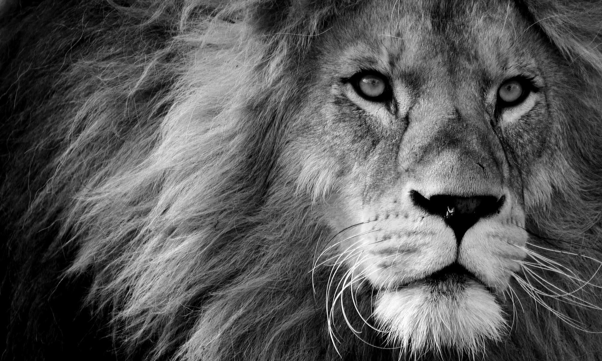 Online-Schreibworkshop für Seniorinnen und Senioren - (Dass der Panther auf dem Bild ein Löwe ist, macht ja nichts!)